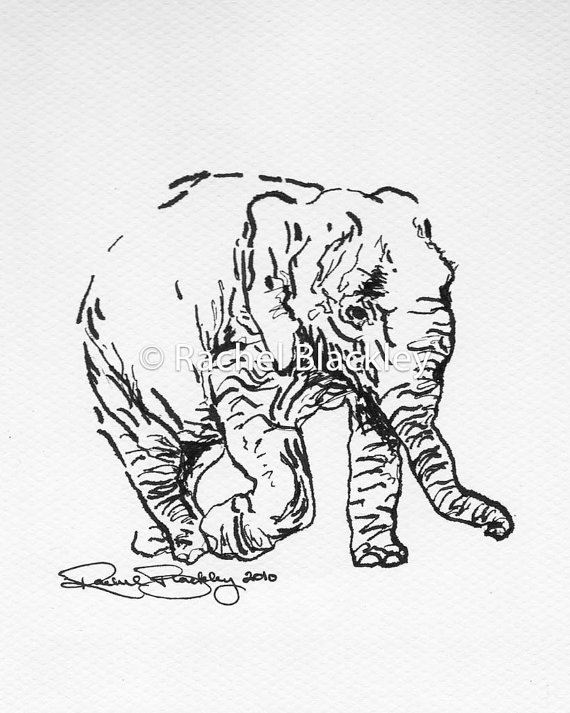 570x713 Walking Elephant Ink Sketch Ink Drawing Pen And Ink Black