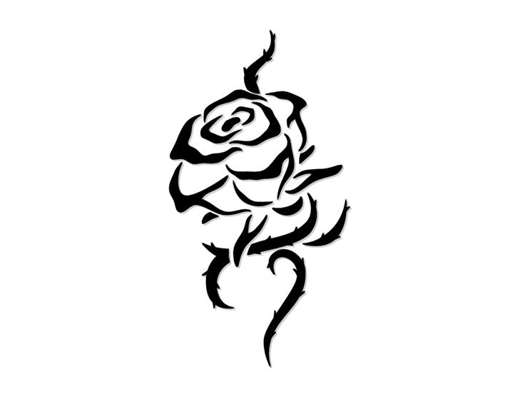 736x552 pictures black rose drawing