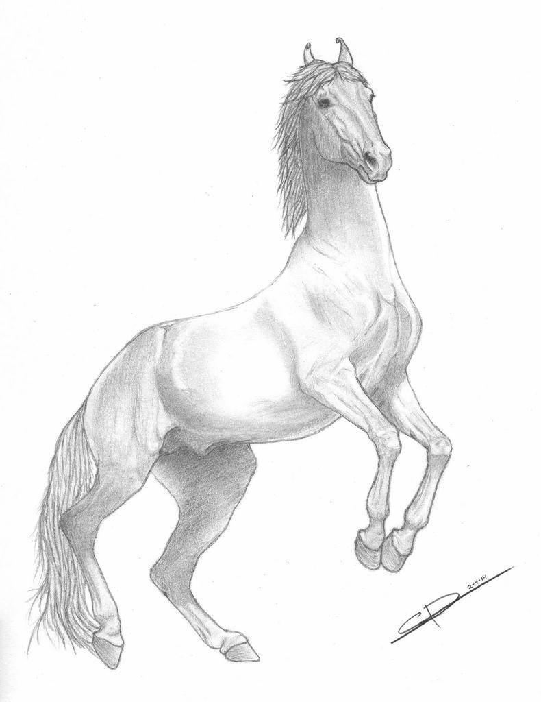 790x1024 Marwari Stallion Newly Finished Portrait Of A Spirited