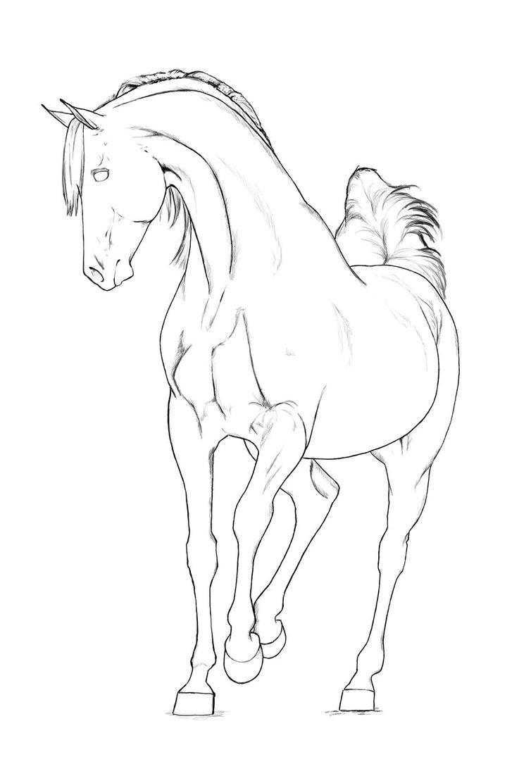 Black Stallion Drawing