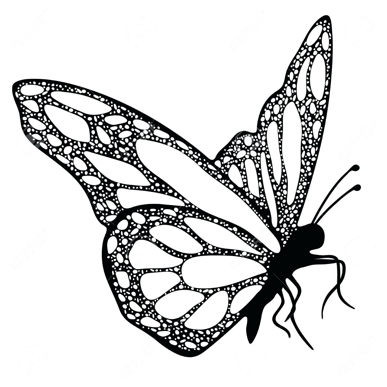 1300x1300 Coloring Coloring Picture Of A Butterfly