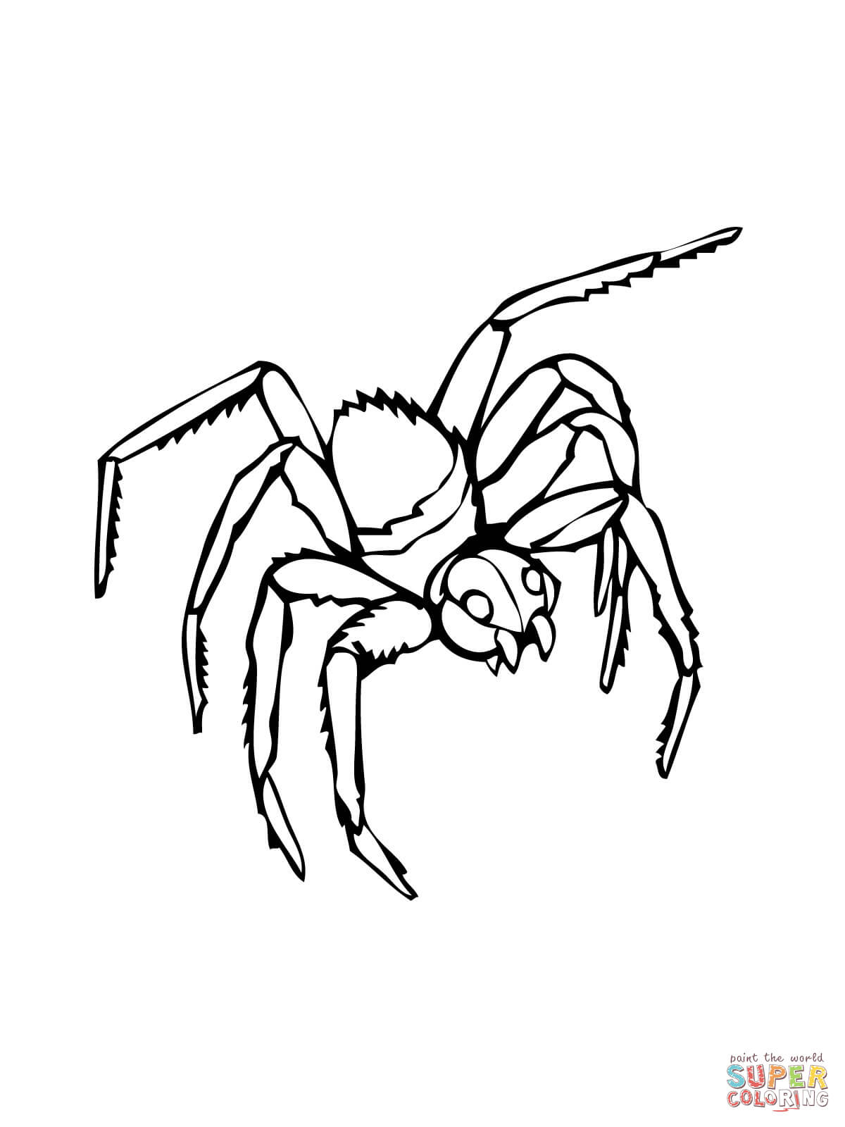 Black Widow Spider Drawing at GetDrawings.com   Free for personal ...