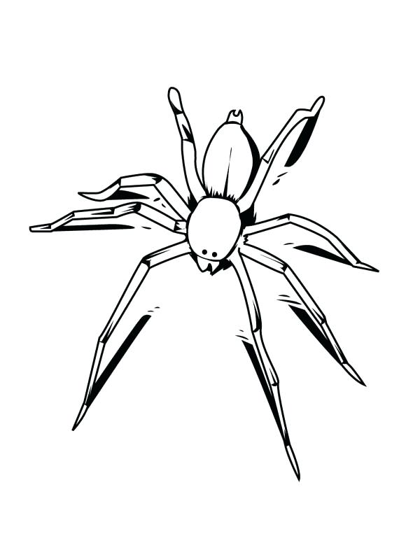 Black Widow Spider Drawing At Getdrawings Com Free For Personal