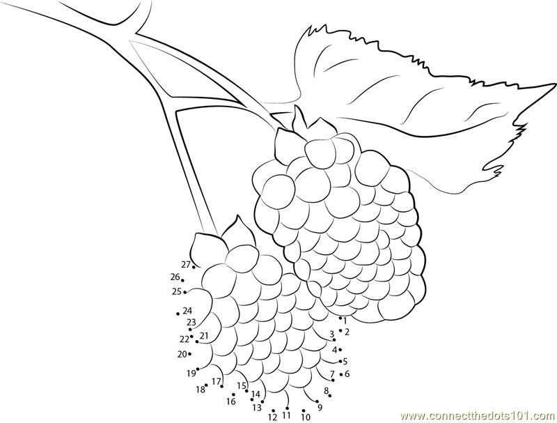 800x607 Blackberry Fruit Dot To Dot Printable Worksheet
