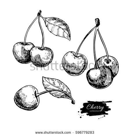 450x470 Drawn Berry Fruit