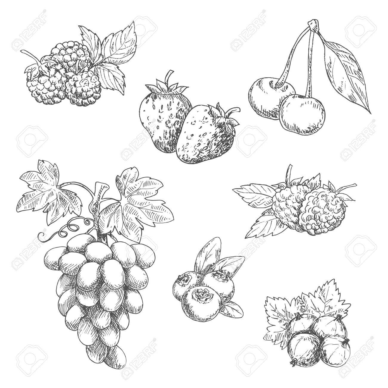 1300x1300 Flavorful Fresh Garden Strawberries, Grape Vine With Tendrils