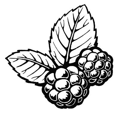 400x385 Blackberries Pictures
