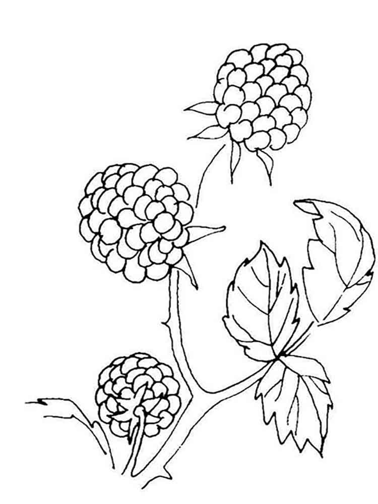 750x1000 Blackberry Coloring Pages. Download And Print Blackberry Coloring