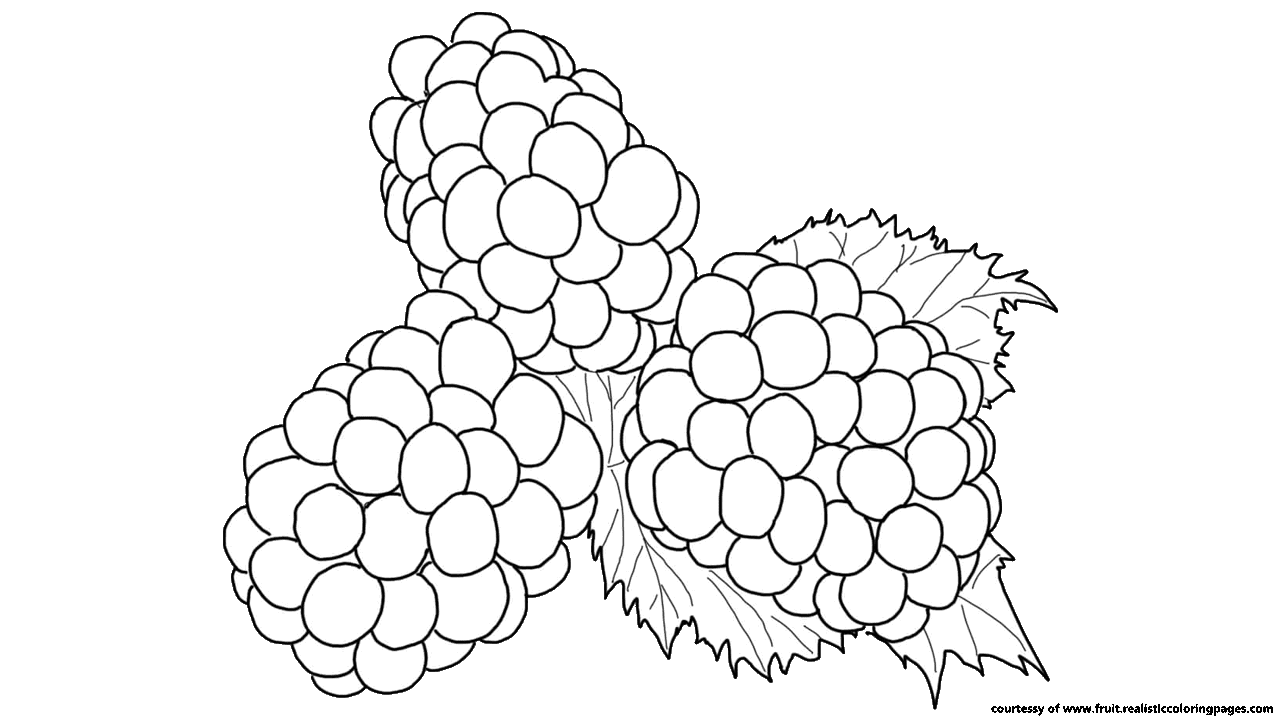 1280x720 Free 7 Awesome Blackberry Fruit Clipart