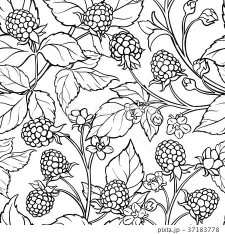 450x468 Blackberry Illustrations