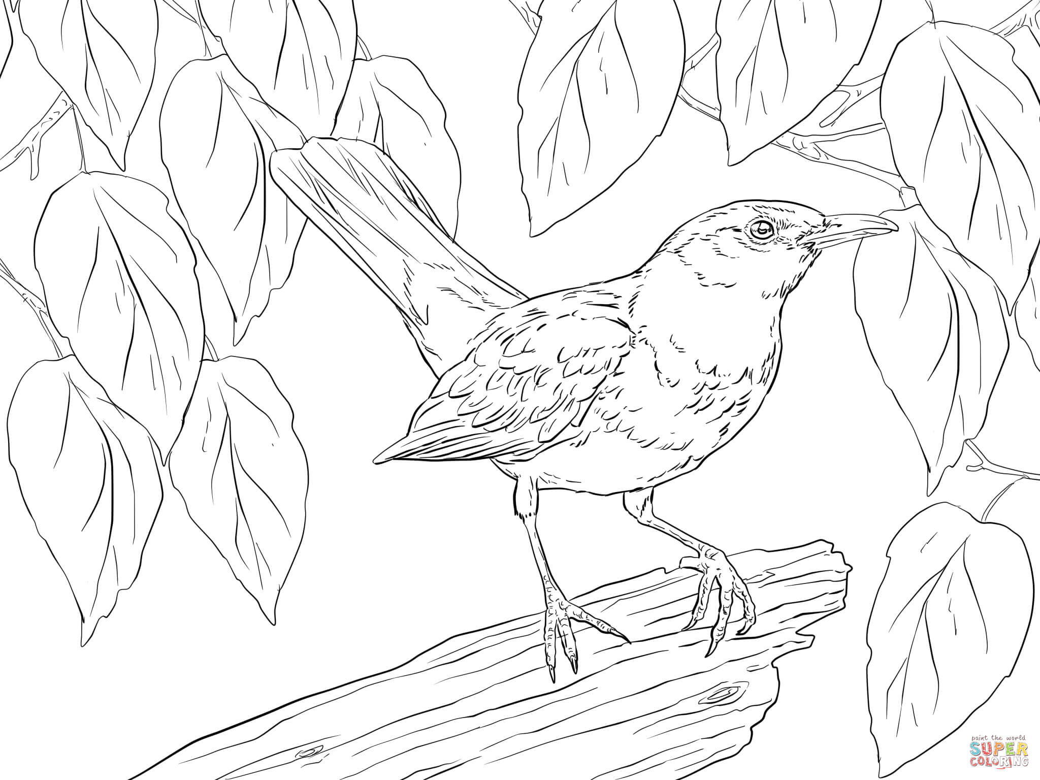 2048x1536 Blackbird Male Coloring Page Free Printable Coloring Pages