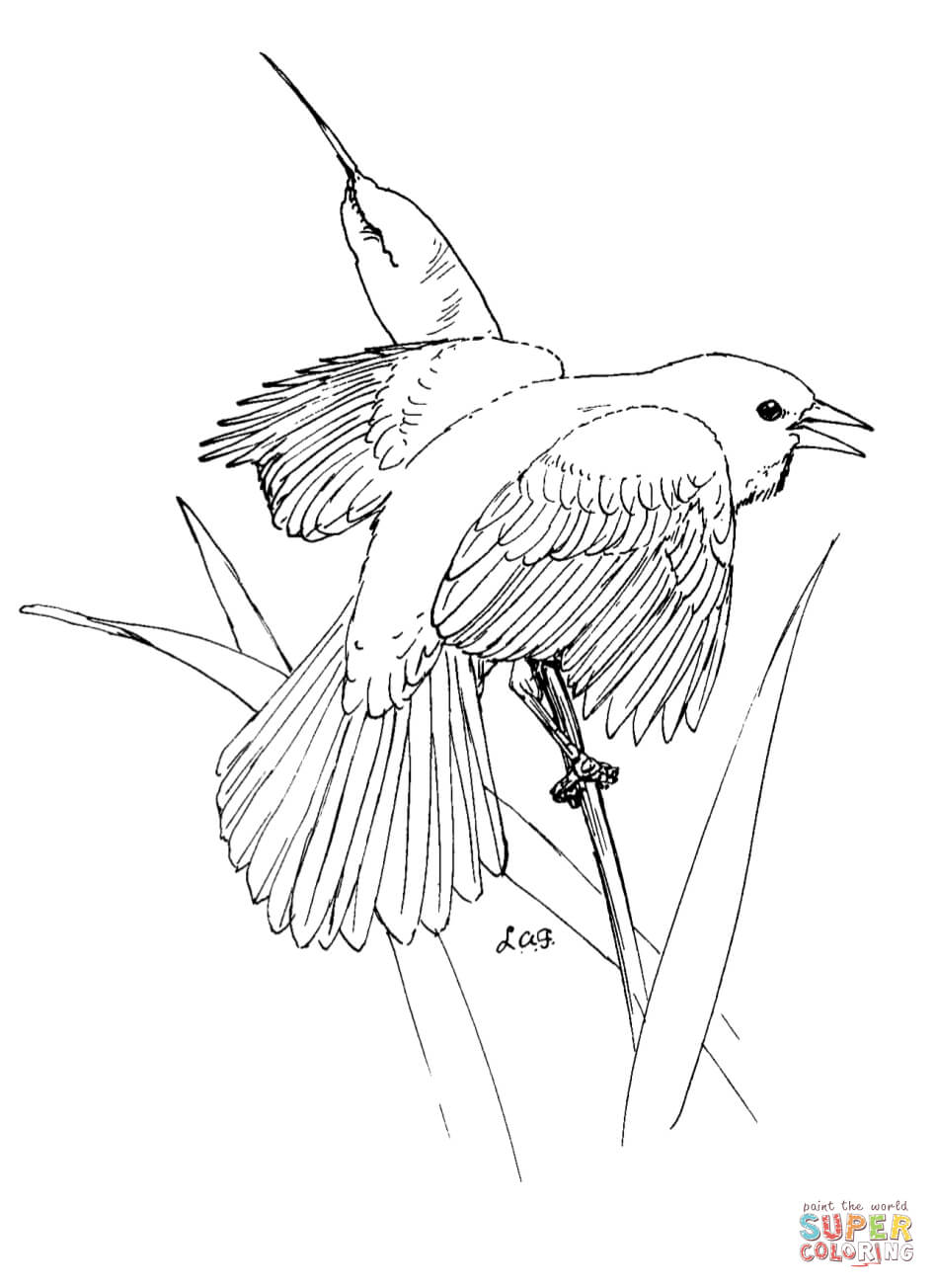 948x1304 Blackbird Coloring Pages Free Coloring Pages