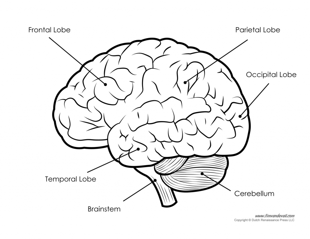 1024x792 Brain Drawing Labeled