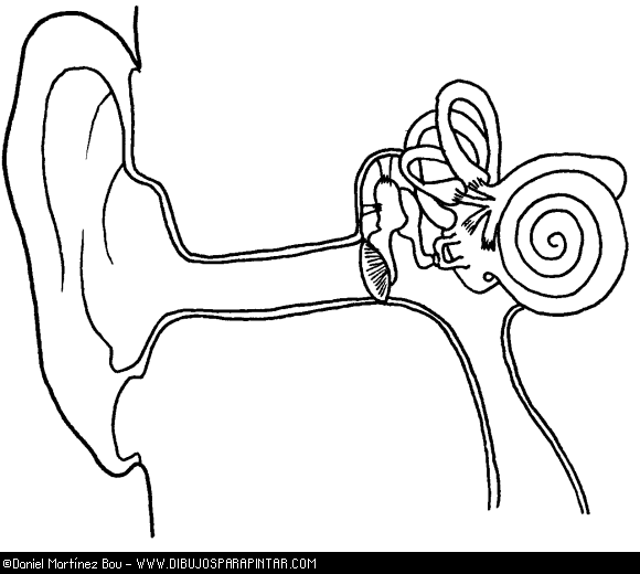 580x520 Ear Anatomy Coloring Sheet Coloring Page For Kids