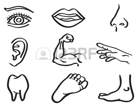 450x350 Human Body Parts Stock Photos. Royalty Free Business Images