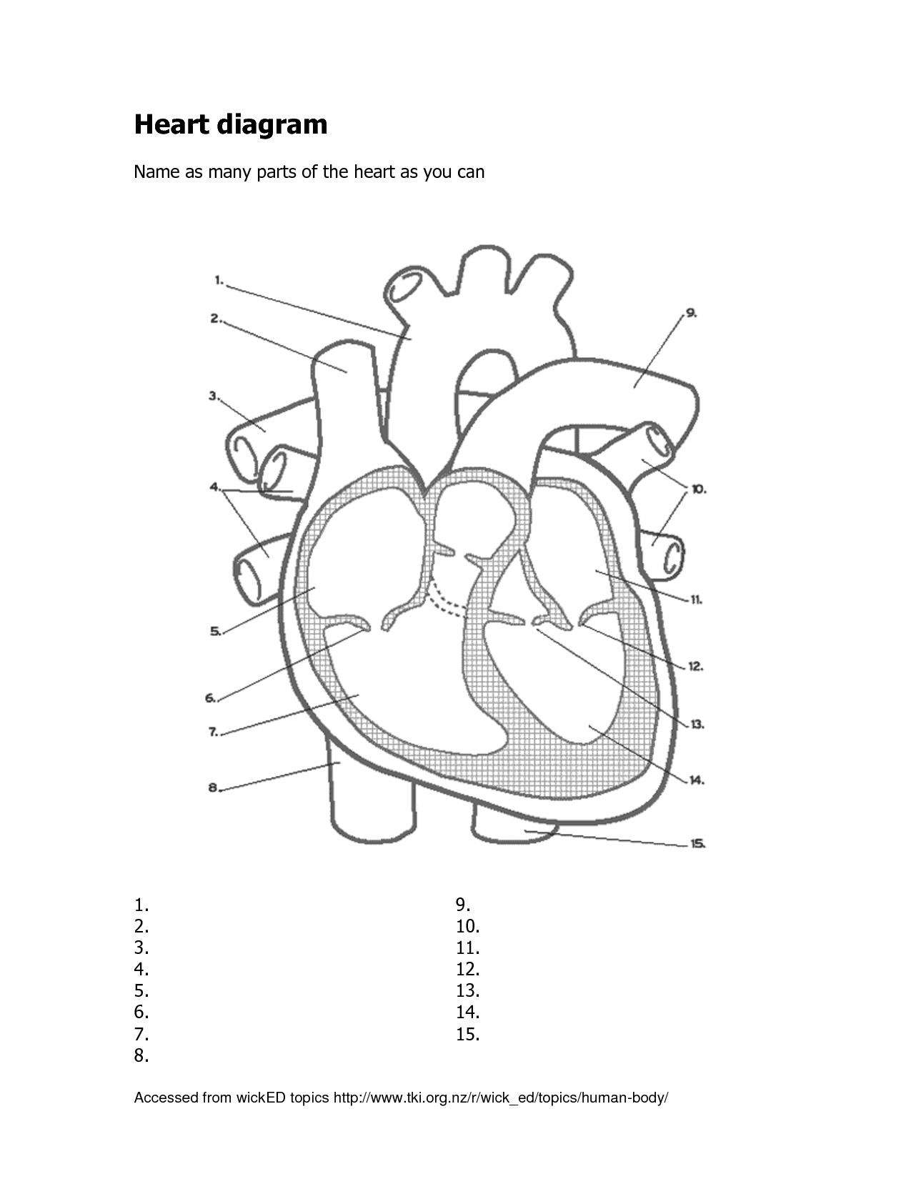 1275x1650 Labeled Pictures Of The Human Heart Applecool Muscles. Human Heart