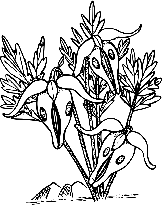635x800 Clipart