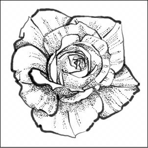 302x303 Rose Drawing Dots F 59) Art Drawing Pencils, Pen And Ink