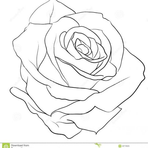 474x474 Rose Pencil Sketch 4 Rose Drawings, Sketches And Drawings