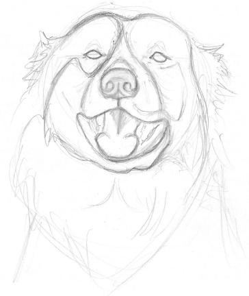 364x432 Drawing American Dog Blog