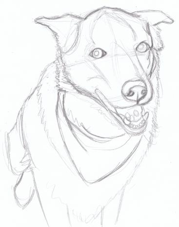 367x464 Sketch American Dog Blog
