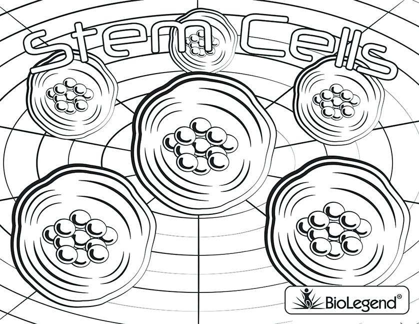 838x647 Cell Coloring Pages Download A Color On The Web Cell Organelle