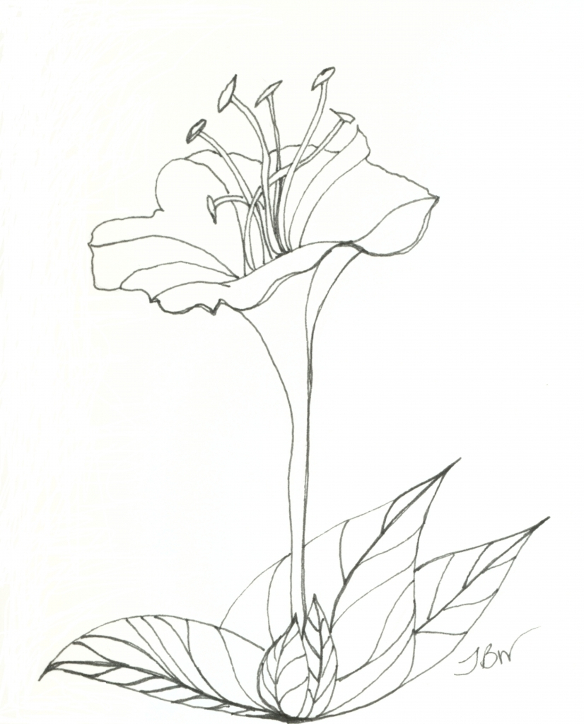 826x1024 Flower Blooming Drawing