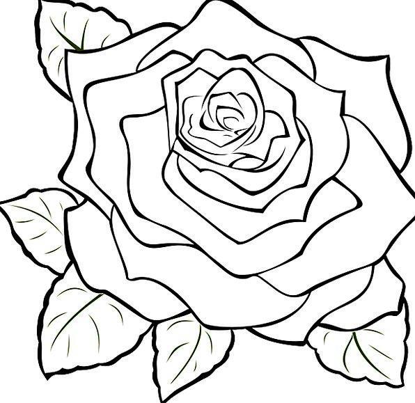 596x579 Rose, Design, Full, Filled, Blossom, Bloom, Beauty, Flower, White
