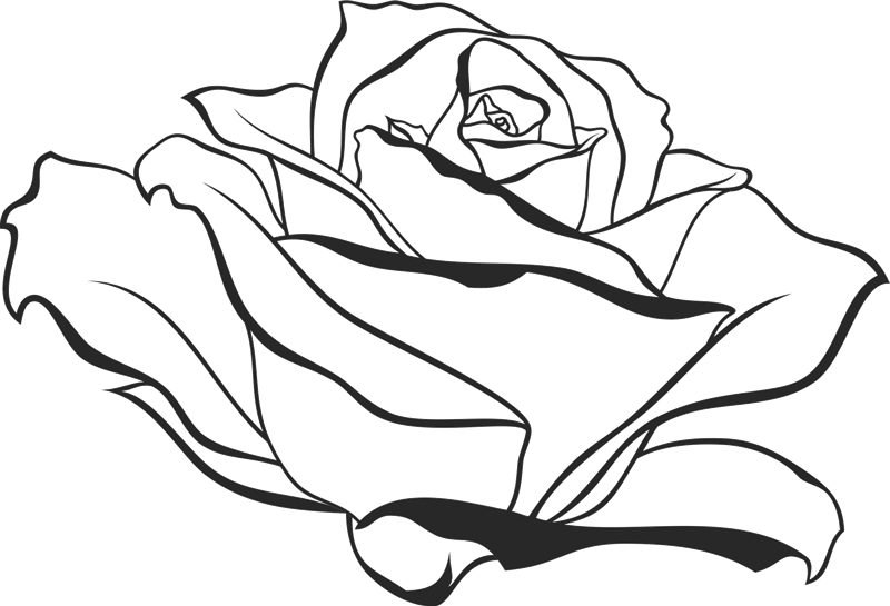 800x545 Side View Of Blooming Rose Rubber Stamp Flower Amp Leaf Stamps