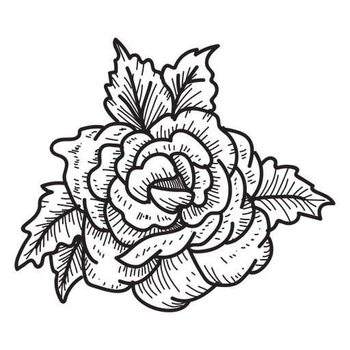 512x512 Blooming Rose Head Sketch Icon Flower