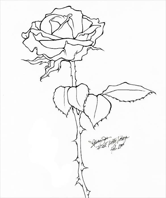 585x695 Rose Drawing Free Amp Premium Templates