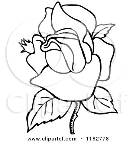 450x470 Clipart Of A Black And White Blooming Rose