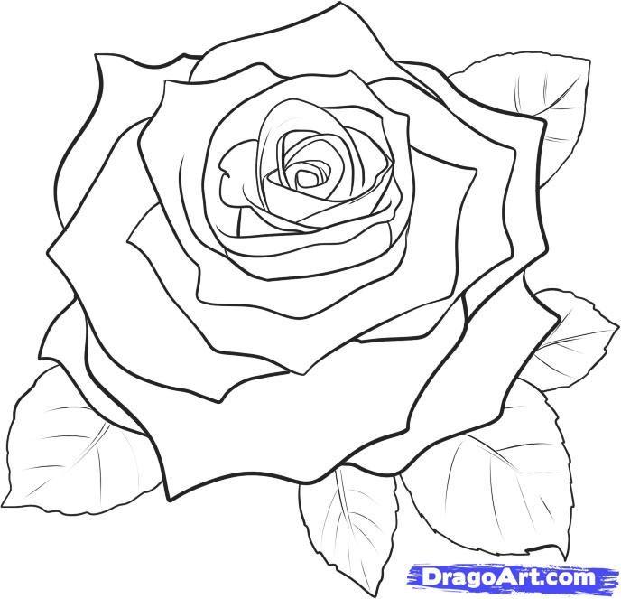 688x663 Drawn Red Rose Real Rose