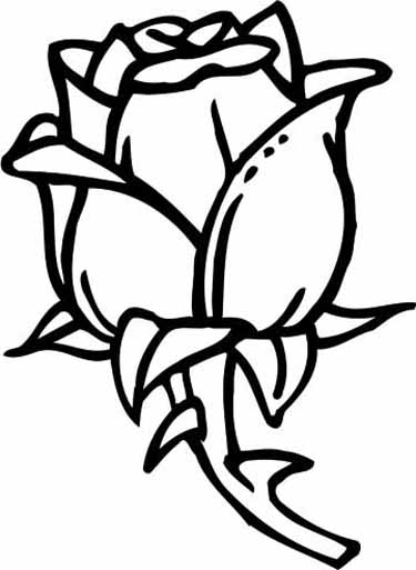 375x513 Exclusive Design Coloring Page Of A Rose Click The Blooming Rose