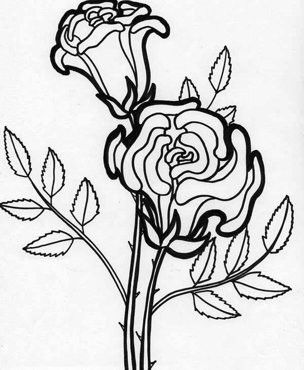 600x730 Flowers, Rose Flower Blooming Coloring Page Rose Flower Blooming