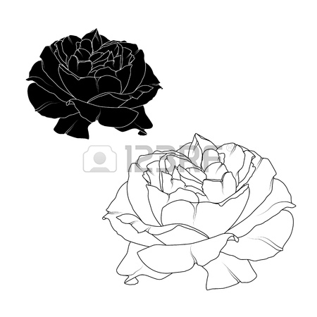 450x450 Realistic Blooming Rose Flower Blossom Isolated. Black And White