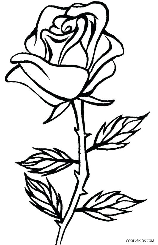 531x820 Rose Coloring Books Click To See Printable Version Of Blooming