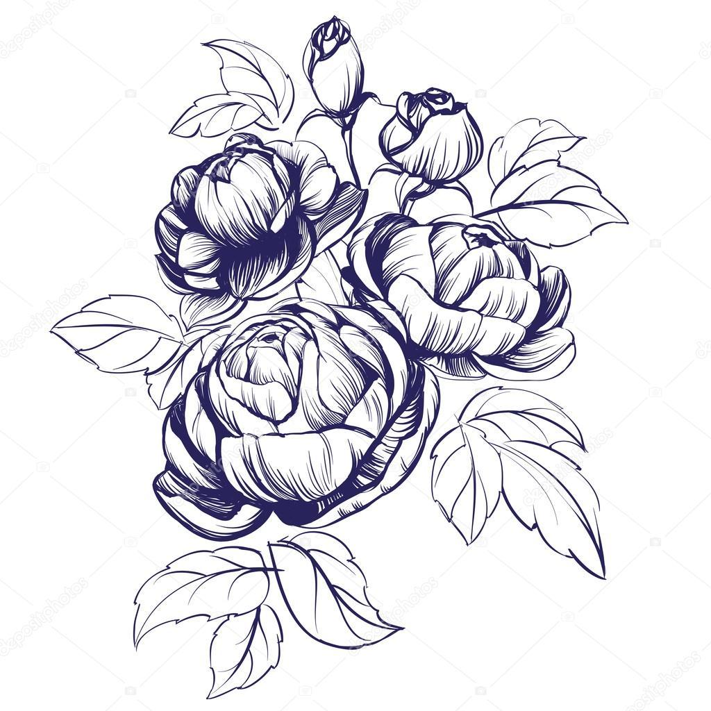 1024x1024 Floral Blooming Rose Branch Vector Illustration Sketch Stock