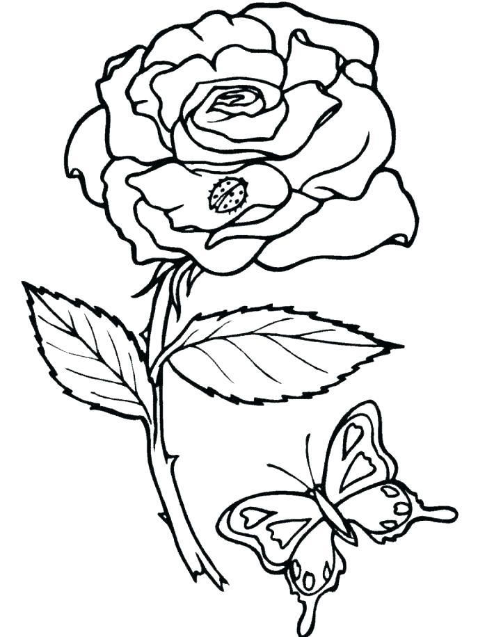 687x916 Rose Color Pages