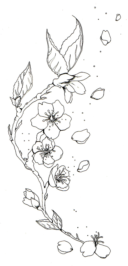 493x1024 Cherry Blossom Sketch Tattoos Cherry Blossom Tattoo B W Tattoos