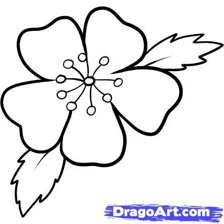 444x444 Easy To Draw Cherry Blossoms How To Draw A Cherry Blossom Step 7