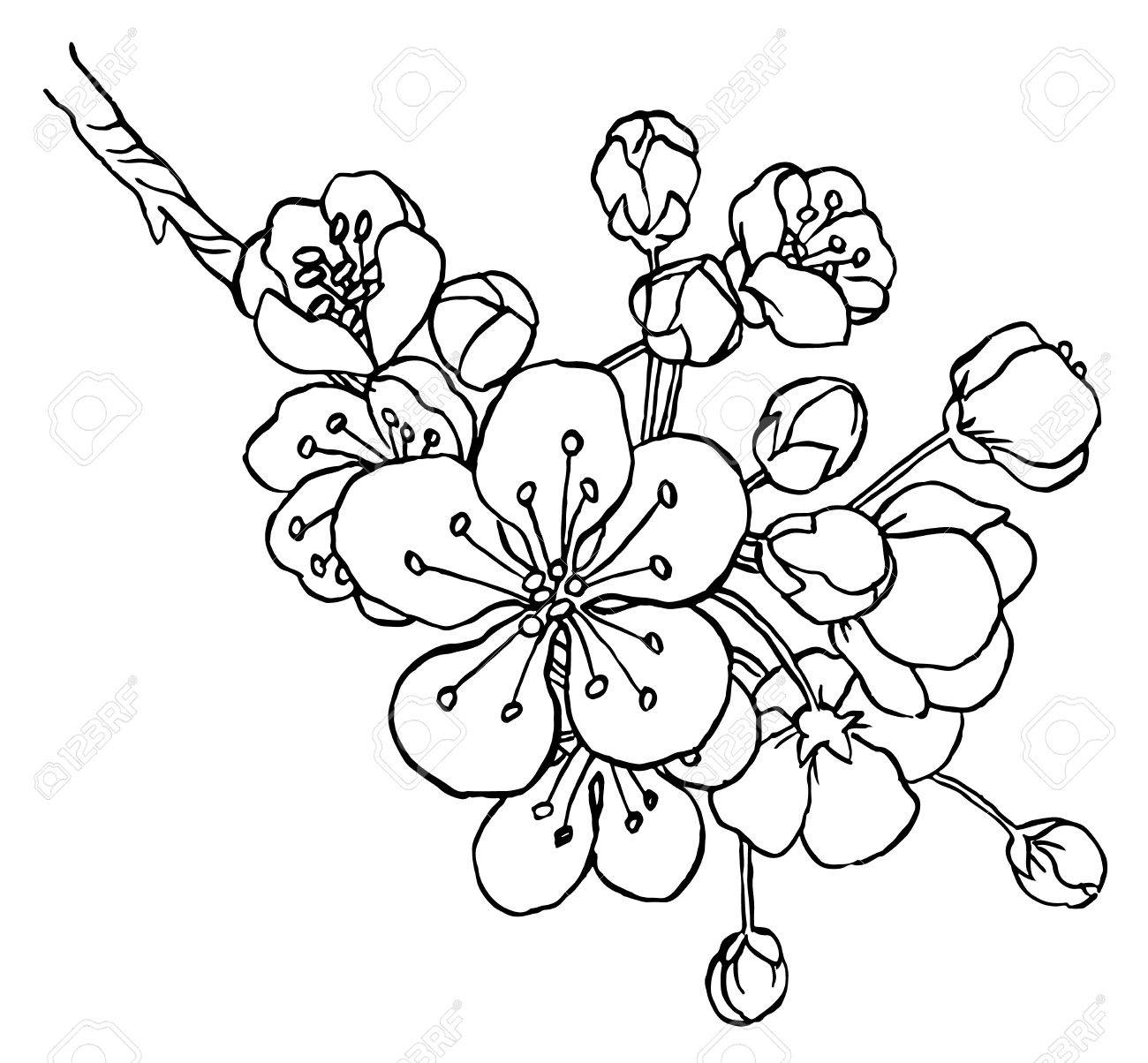 1300x1204 Hand Drawing Apple Tree Branch In Blossom Line Art Isolated