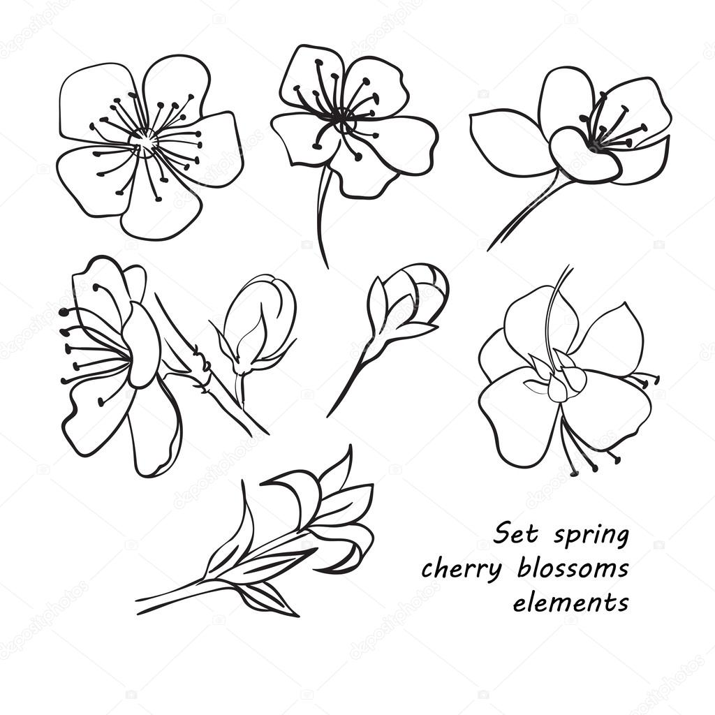 1024x1024 Set Of Spring Cherry Blossom Flowers. Hand Drawing. Stock Vector