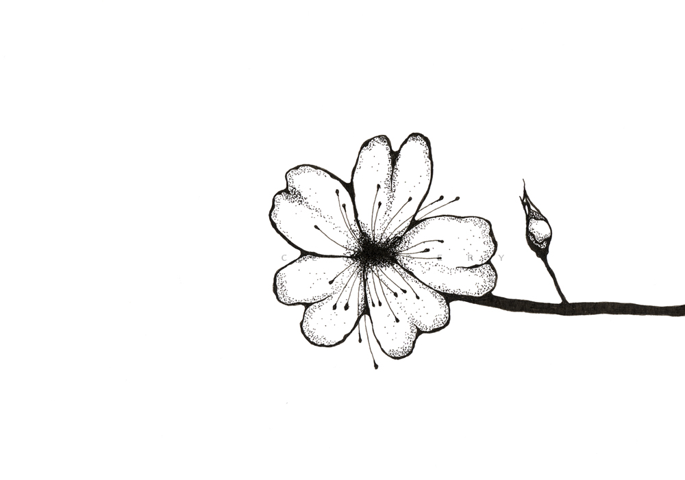 1000x701 Cloudery Pen Amp Ink 2011 Cherry Blossom