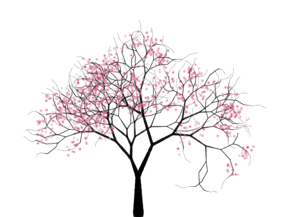997x743 Cherry Tree Elizabeth Fuller