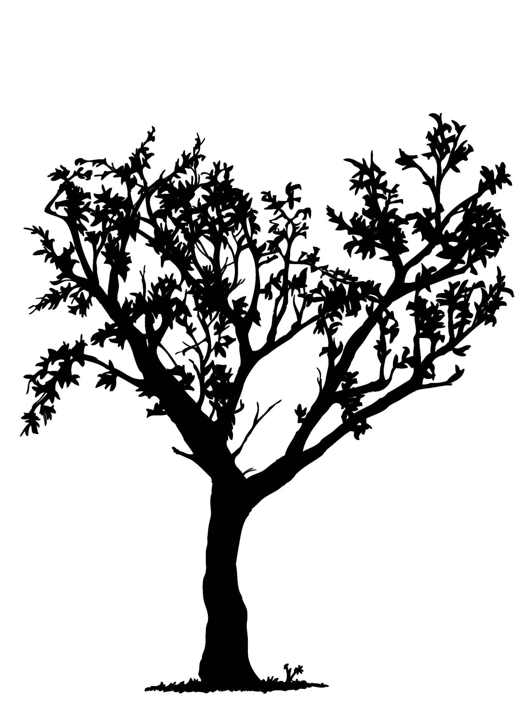 1744x2355 Black And White Tree Drawings