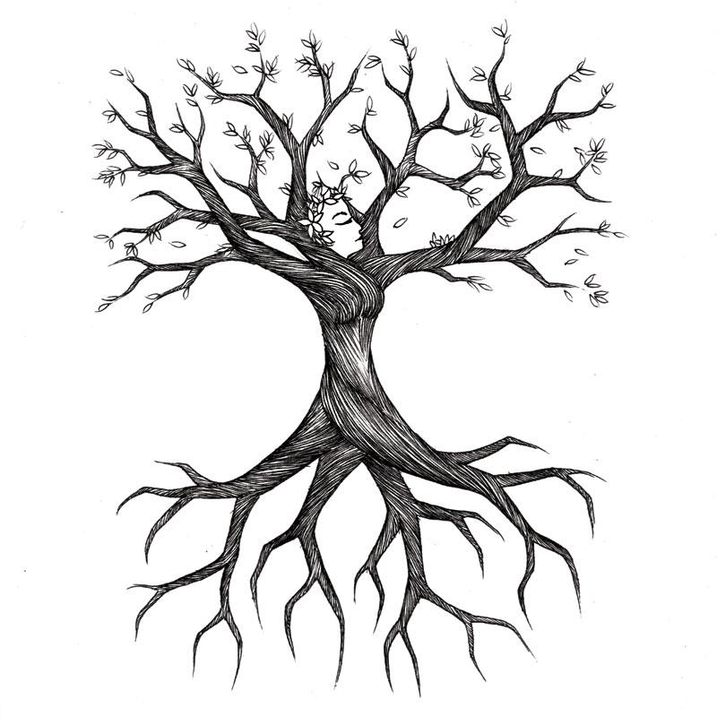 800x800 Drawn Roots