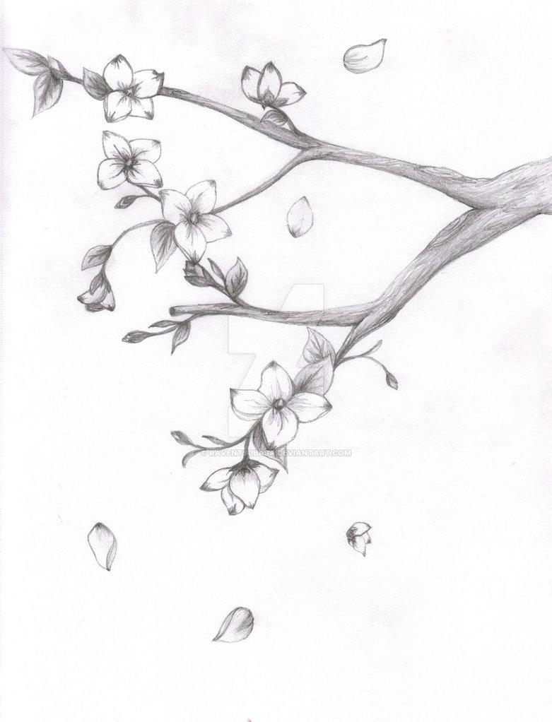 781x1022 Japanese Sakura Blossom By Raventsubasa
