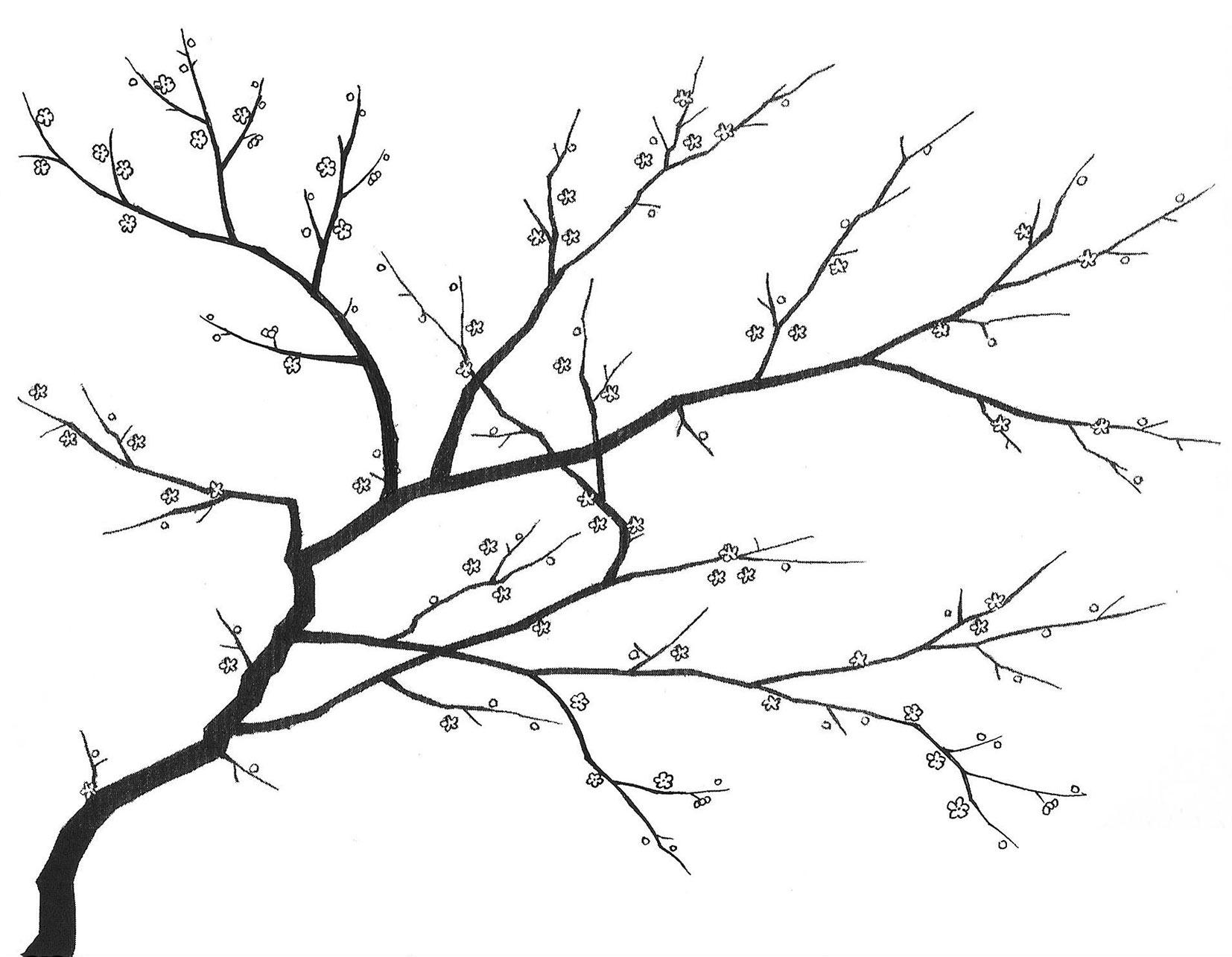 1654x1285 Cherry Blossom