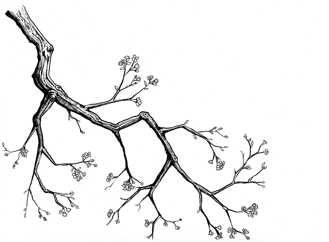 1153x847 Cherry Blossom Tree Drawing Cherry Blossom Drawing Google Search